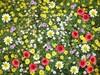 Floral_carpet
